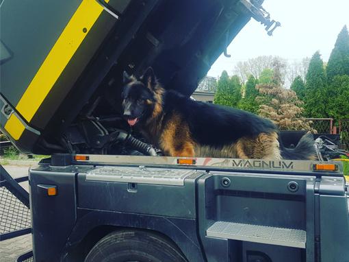 O psie, który jeździ ciężarówką